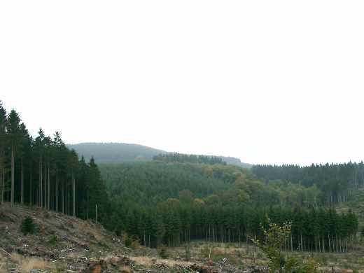 Bois lAbbesse  Patrimoine du Morvan