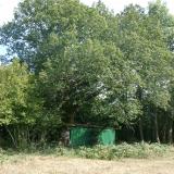 Un chêne, vestige d'une pratique ancestrale : l'étolage.( © M Olivier Thiébaut (PNRM) )